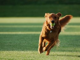 How To Train Your Dog To Catch A Ball: With Just 2 Simple Steps
